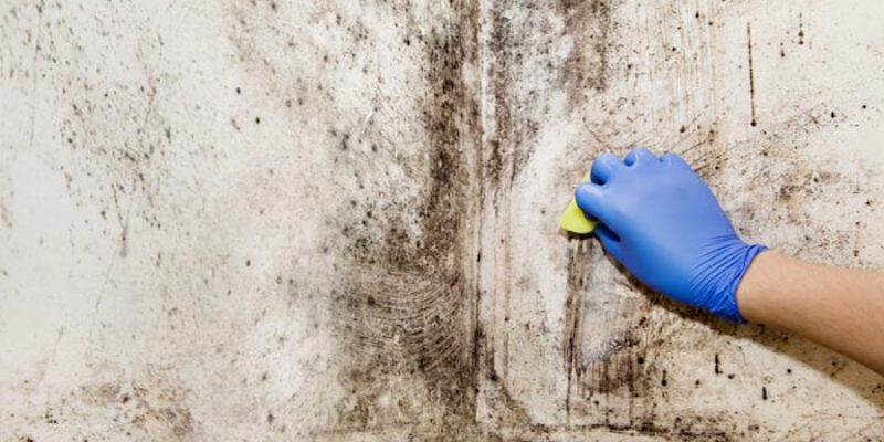 Non-Toxic Mold Neutralizing Agents for Your Home